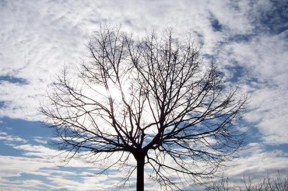 albero in controluce - Foto di Andrea Macco
