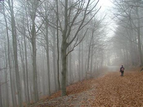 Piccolo uomo nella nebbia - Foto di Andrea Del Ponte