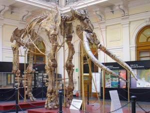 museo civico storia naturale genova