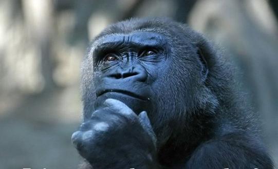 Uomo: animale o pensatore?
