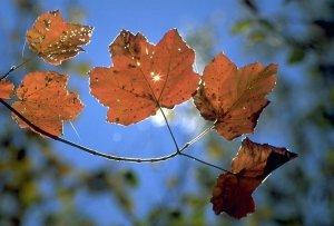 foglie d'autunno - foto A.Macco